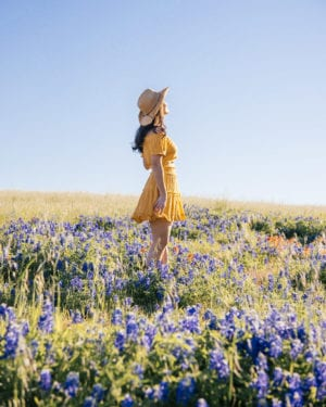 How to See the Most Picturesque Bluebonnets near Dallas