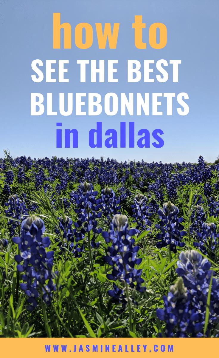 where to see bluebonnets near dallas