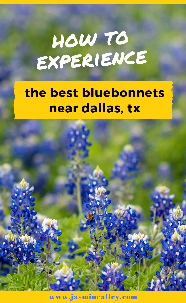 Searching for bluebonnets this spring? Here is the best place near Dallas to see them: the Ennis Bluebonnet Trail! Whether you\'re looking for a perfect date idea, looking for fun things to do in Dallas this spring, want a drool-worthy Instagram post, or just want a perfect floral photoshoot/ photography, the bluebonnets are the perfect backdrop. So if you\'re asking where to see the best bluebonnets this year, I\'ve got the answer here! #texasbluebonnets #bluebonnets #flowerfield #dallas #texas