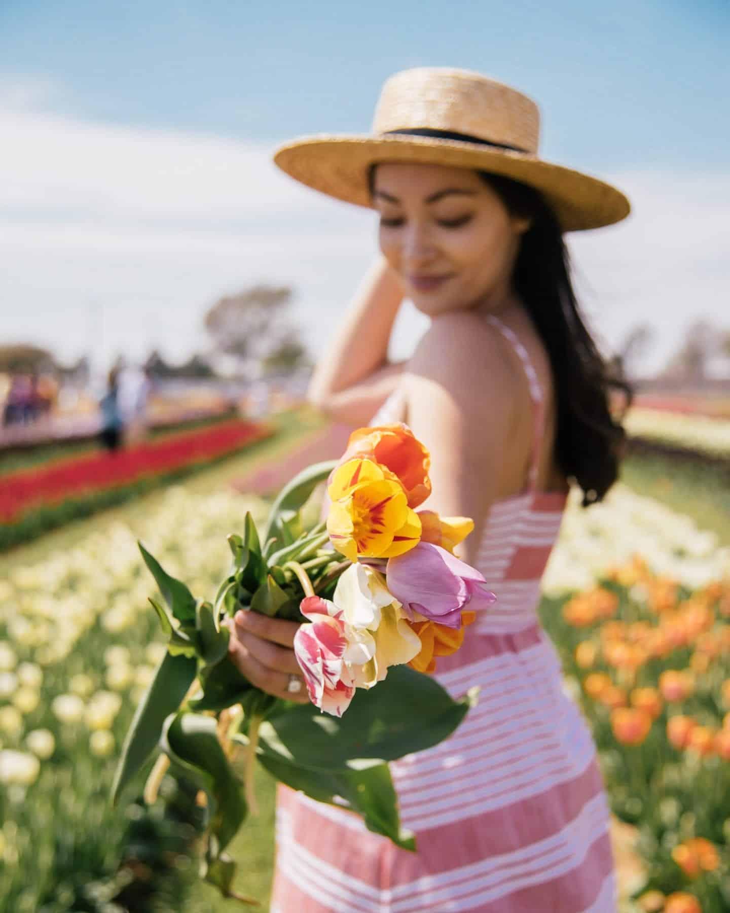 tulips close up