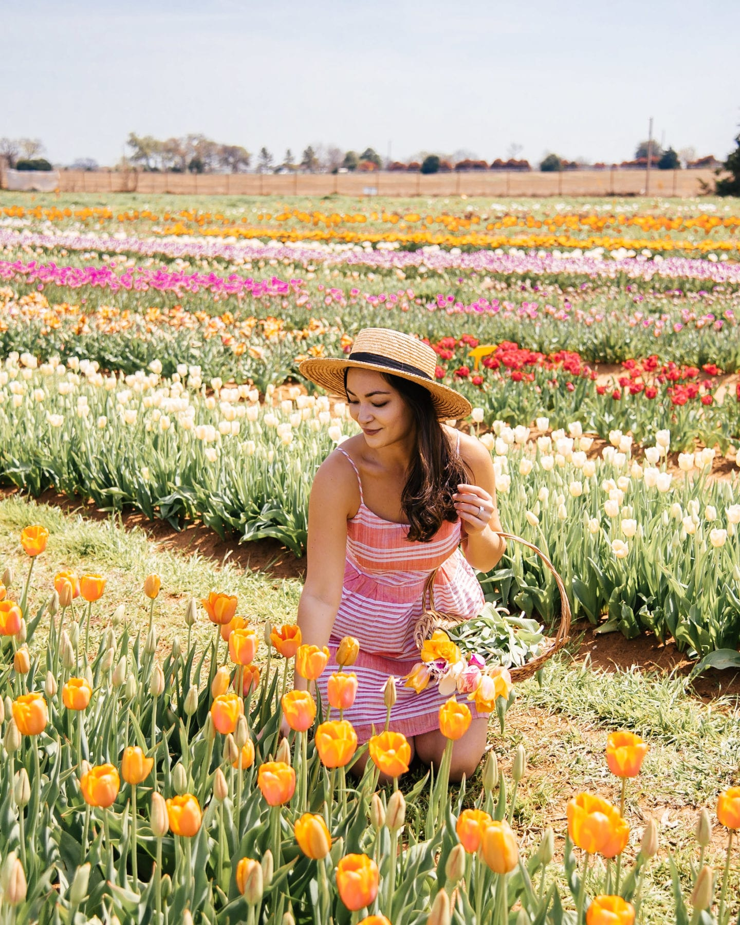 woman picking tulips at texas tulips