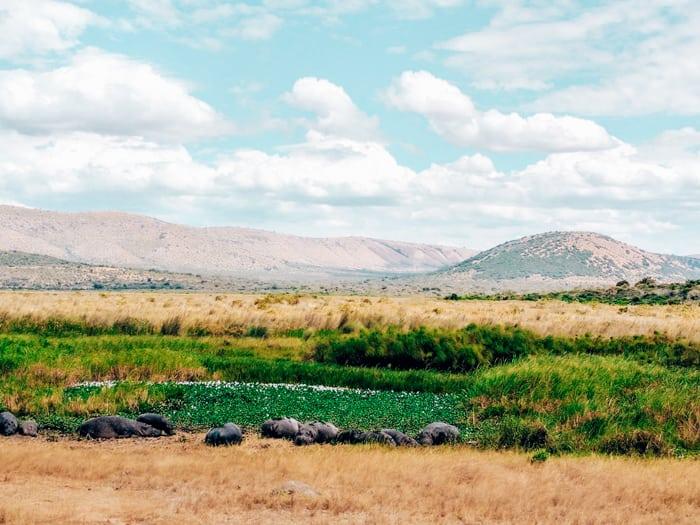 hippos akagera park