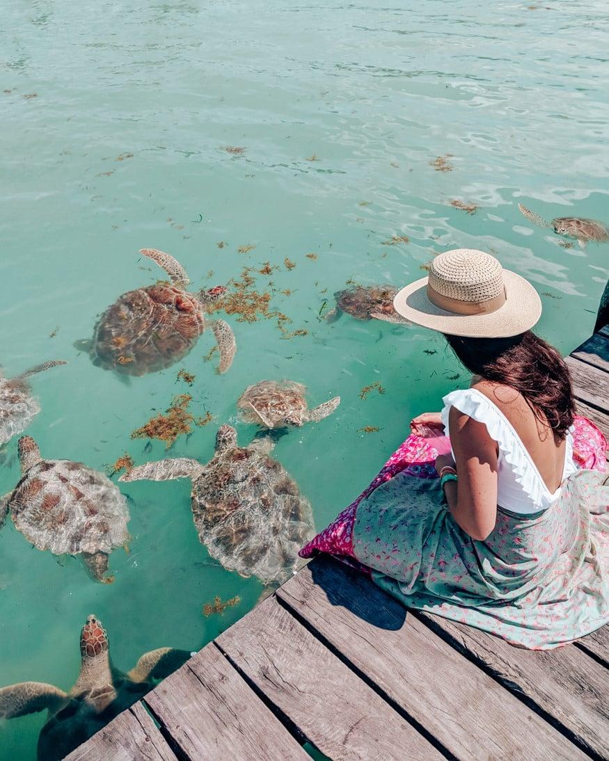 Feeding the sea turtles on Isla de Mujeres