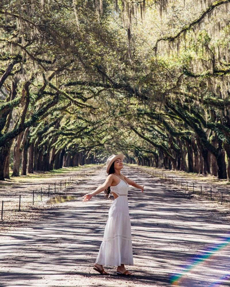 Wormsloe State Historic Site Driveway Live Oak Tree Tunnel Savannah